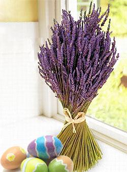 Natural plant dyes - Lavender