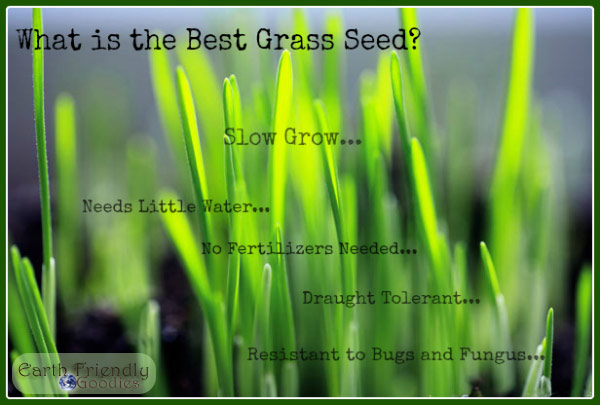 slow grow grass seed is the best grass seed
