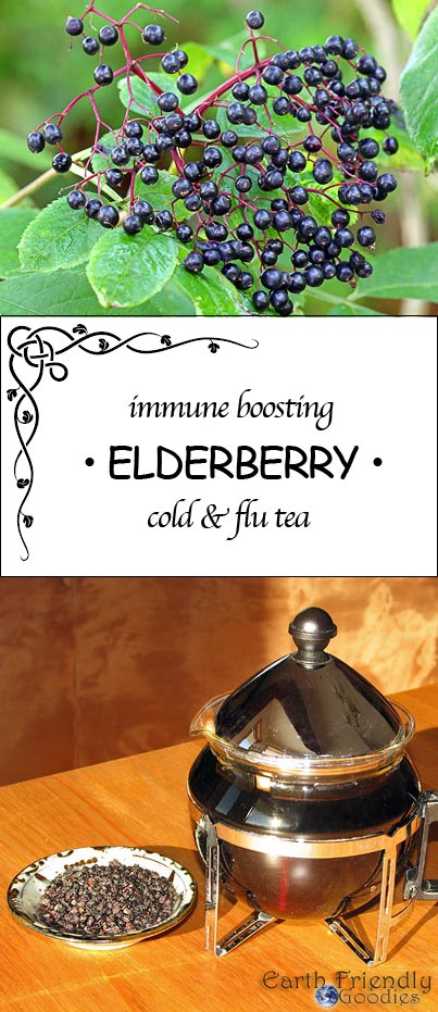 elderberry tea or syrups help boost the immune system