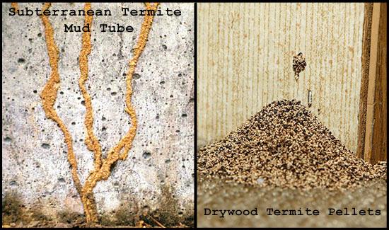 Orange Oil Termite Treatment A Safe Effective Fumigation